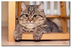 Котики-наши милые пушистые друзья !