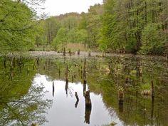A bakonyi Gyilkos-tó remek ellenszer a stresszre Budapest Hungary, Places To Go, Tours, River, Explore, Nature, Outdoor, Beautiful, Outdoors