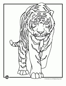 tiger color page Fun learning Pinterest Tigers Embroidery