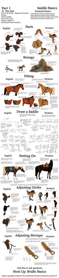 These aren't the only things out there of course, but it should get you started and keep your drawing busy. Available in smaller, more digestible chunks at www.htdhorses.com