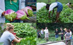 A New Leaf: Pennsylvania Program Teaches Rural Teens to Farm #farming #agriculture #education