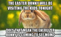 http://www.bodenclothingukoutlet.com/funny-easter-bunny-meme/ Download Happy Easter Images Pictures Photos On Facebook, WhatsApp, Instagram, and other social media sites. Share Happy Easter Images Of Jesus, Christian Easter Pictures Religious and Happy Easter Images 2018 Tumblr FB, Easter Clipart Images, Free Easter Bunny Images, Easter Pics For Jesus, Easter Photos For Jesus.