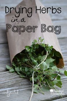 Drying Herbs in 5 Simple Steps - preserve your herbs with this easy method!