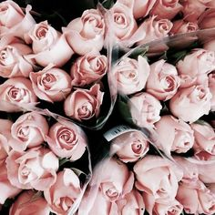 roses are pink violets are purple  my eyes shine like stars yours should too
