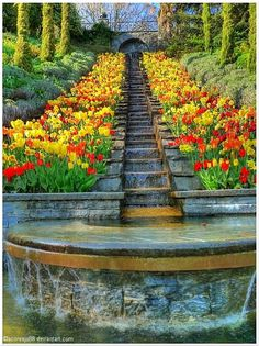 Tulips in glorious bloom flank a waterfall