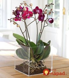 Phalaenopsis Orkideer Phaleonopsid are the most popular and easily available orchid. Here are some grow care tips for orchis: Related Post Phalaenopsis Mini Mark Phalaenopsis – Diamond Series How To Make A Terrarium Quickly And Easilyİkili Orkide Orchid Terrarium, Orchid Planters, Orchid Pot, Orchids Garden, Terrarium Wedding, Garden Plants, Indoor Flowers, Exotic Flowers, Indoor Plants