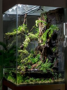 Terrarium with water section. Looks awesome!