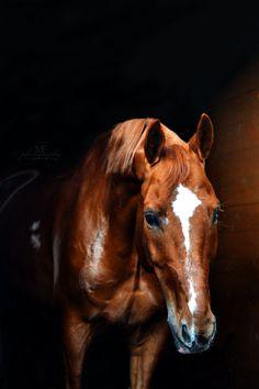 Лошади - альбомы - Мария Эрич - конники - equestrian.ru