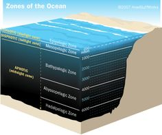 Google Image Result for http://static.ddmcdn.com/gif/bioluminescence-ocean-a.gif