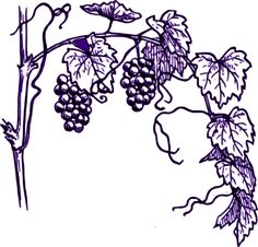 Purple Grape Vine Clip Art