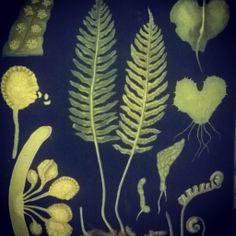 Old school botany poster