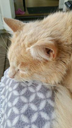 My cat enjoy my lap