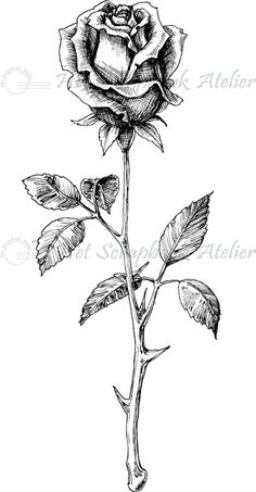 Develop A The Moment Upon A Dream Fairy Tale Birthday Bash Hp Stempel Roos Klein Pencil Drawings Of Flowers, Flower Sketches, Pencil Art Drawings, Art Drawings Sketches, Rose Drawings, Rose Drawing Tattoo, Flower Tattoo Drawings, Flower Tattoos, Rose Stem Tattoo