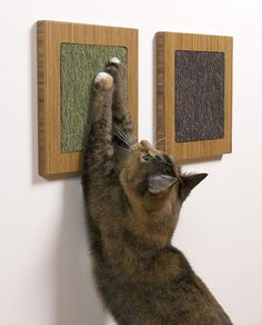 You can buy these from the website or DIY it. Glue a carpet sample onto a wooden frame for a minimalist cat scratcher.