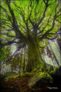 "broceliande, "" ponthus ""by philippe MANGUIN photographies, via Flickr"