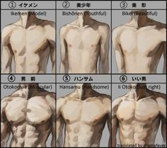male body type torsos