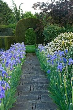Clipped arch at the end of flagstone path flanked by iris.The Garden Aesthetic
