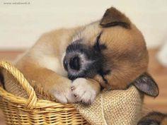 educazione cuccioli, adottare un cucciolo, sistemare un cucciolo in casa