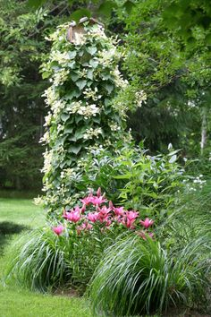 lovely combo: grasses, lilies, climbing hydrangea or schyzophragma. Lawn And Landscape, Green Landscape, Small Gardens, Outdoor Gardens, Climbing Hydrangea, Side Garden, Garden Oasis, Garden Pictures, Gardening
