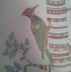 Woodpecker In Millie Marottas Animal Kingdom