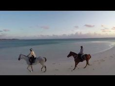 Immersion in LUX* Belle Mare, Mauritius She Likes, Tropical Garden, Mauritius, Beautiful Islands, Camel, Coast, Oct 2016, Horses, World
