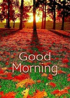 In today's post, we are presenting good morning msg. If you are searching for good morning msg you are welcome to our website. Good Morning Friends Images, Good Morning Sister, Latest Good Morning Images, Good Morning Nature, Good Morning Thursday, Good Morning Images Download, Good Morning Good Night, Good Morning Beautiful Pictures, Happy Morning Quotes