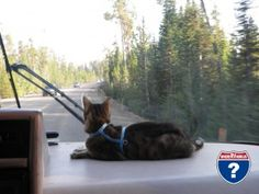 Maui went on several walks at various locations in Yellowstone. He didnt care for the wind near the lake but loved exploring. He also enjoyed viewing the sites from his spot on the dashboard as we slowly made our way around Yellowstone National Park.