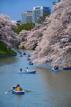 Chidorigafuchi  - boats and petals Pinterest users can get 20% off the ebook with this code: PINT20