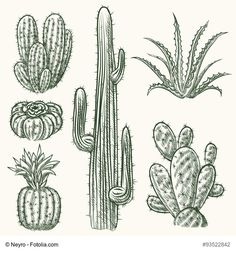 Hand drawn vector cactus set. Plant mexican nature, flora exotic illustration