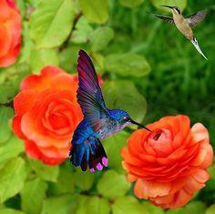 Flowers fashion inspiration models 17 Ideas for 2019 Fashion Editorial Nature, World Birds, Hummingbird Tattoo, Bird Artwork, Nature Plants, Mundo Animal, Colorful Birds, Little Birds, Flower Fashion