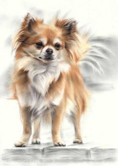 Conté Pastel Portrait of Chihuahua Katja Turnsek Pastel Portraits, Dog Portraits, Chihuahua Puppies, Dogs And Puppies, Chihuahuas, Cute Dogs, Cute Puppies, Fish Cat Toy, Dog Paintings