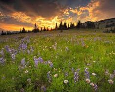 Image result for beautiful spring pictures