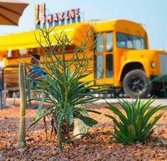 باس مارینی جزیره کیش انتهای خیابان مرجان ۹ کافه و رستوران busmarin Cafe Restaurant, Whimsical, Illustration, Plants, Illustrations, Plant, Planets