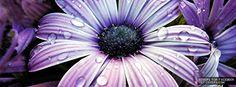Purple Flower - Facebook Covers | Facebook Profile Covers