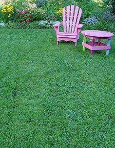 Stop regarding clover as a lawn weed; consider it as a lawn, a dream lawn, in fact. Lush, drought-tolerant and pest-free, clover makes a lawn that requires less cutting, little watering and no feeding (unlike traditional turf). This means lighter work for the gardener and fewer pesticides to hard the environment. In addition, clover has nodules on its roots that slowly release nitrogen, enriching the soil and making fertilizer unnecessary. Planted alone or blended with grass, clover forms an…