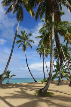 Classic beach near Las Terrenas, Dominican Republic