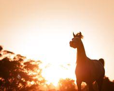 Klassical Dream MI Klass x Mustangs Magnum Photo by Stuart Vesty