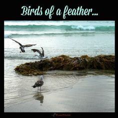 Birds of a feather...