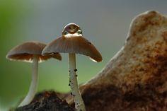 Drops on Mushroom