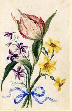 Drawing from an album, white and crimson Tulip, purple Larkspur and yellow Narcissus, tied with blue ribbon Watercolour over metalpoint, shaded with grey wash, on vellum