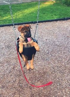 """Just Pup Things on Hope you're doing well.. From your friends at phoenix dog in home dog training""""k9katelynn"""" see more about Scottsdale dog training at k9katelynn.com! Pinterest with over 21,000 followers! Google plus with over 180,000 views! You tube with over 500 videos and 60,000 views!! LinkedIn over 9,300 associates! Proudly Serving the valley for 11 plus years! Now join us on instant gram! K9katelynn"""