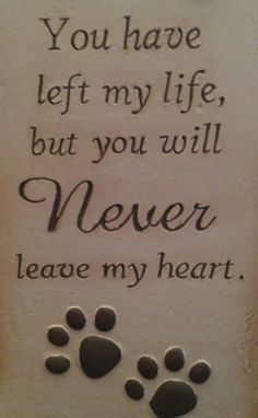 You have left my life, but you will NEVER leave my heart - RIP all of my beloved cats who have gone to the Rainbow Bridge! I Love Dogs, Puppy Love, Cute Dogs, Yorkies, Chihuahuas, Pomeranians, Cotton De Tulear, Pet Sitter, Pet Loss Grief