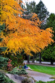 Fall color in Bellevue botanical garden, Bellevue, WA - photo by Jay Yang