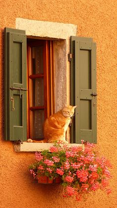 This photo has all the elements: 1) beautiful colors, 2) Nice rustic window, 3) lace curtains, 4) flowers, and finally 5) a RED cat!... my kind of window!