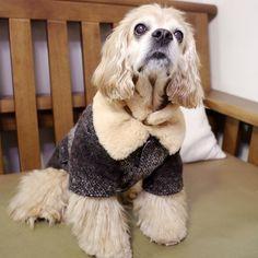 http://www.coccola.co.kr/  귀엽고 시크한 강아지옷 코콜라 CoCCoLa 입니다. CoCCoLa 코콜라 신상 모직 코트 코콜라 울 더블브레스티드 코트 브라운