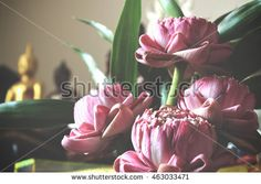 pink lotus flower for pay homage to a buddha, over light and vintage tone [blur and select focus background]