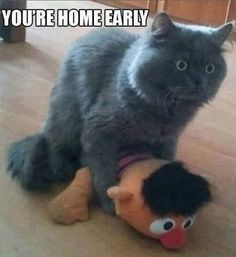 You're Home Early - Surprised Cat Loves Ernie Long Time - Somebody Call Bert  ---- best hilarious jokes funny pictures walmart humor fail