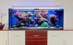 Image Detail For Large Marine Aquarium 60 Gallon Large