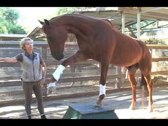 Lukas - The World's Smartest Horse - 2009 Update Part 3 of 5    Lukas is a 16 - year - old Thoroughbred and former race horse. He lives in Walnut, California and is owned by Karen Murdock. He is considered by many as The World's Smartest Horse!