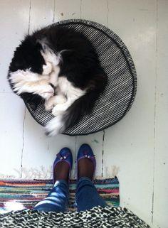 home Weird, Random, Cats, Places, Winter, Shoes, Winter Time, Gatos, Zapatos